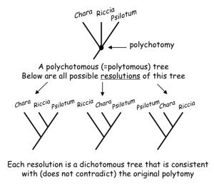 Polytomies